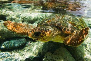 https://www.biosfera1.com/wp-content/uploads/2020/06/1.-tartaruga-300x200.jpg